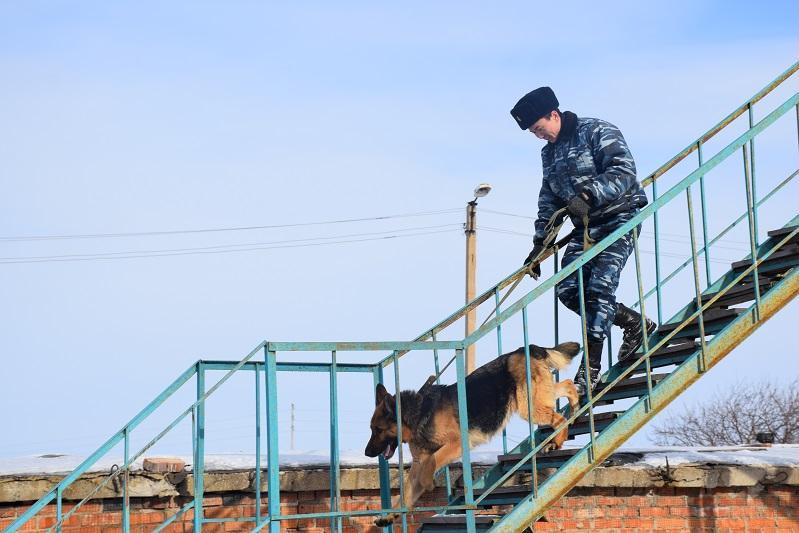 Более 800 преступлений раскрыли  акмолинские полицейские с помощью собак