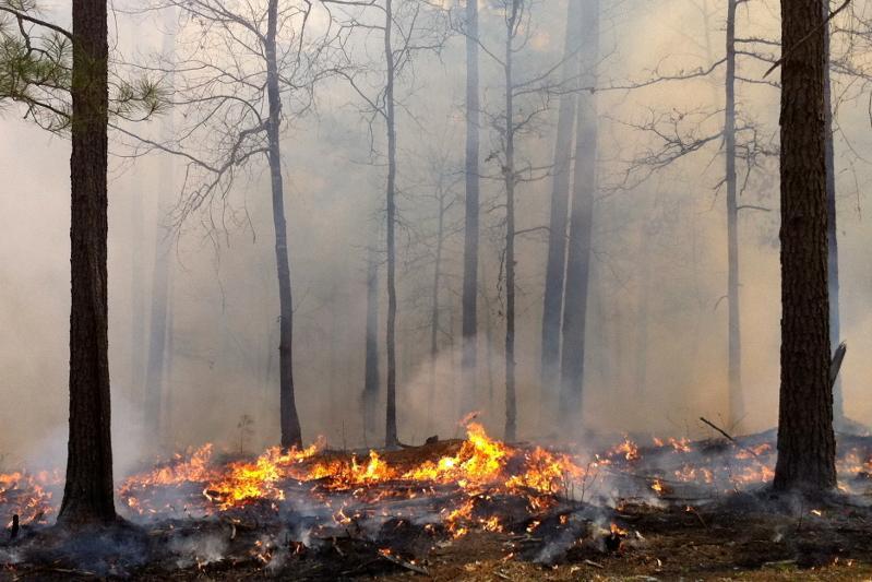 Пожар тушат в Катон-Карагайском природном парке