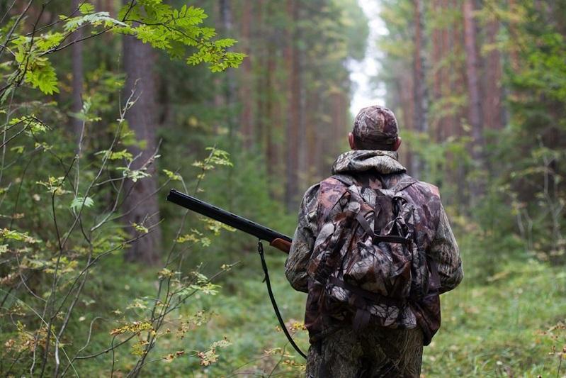 Трофейная охота: каких животных могут разрешить к отстрелу