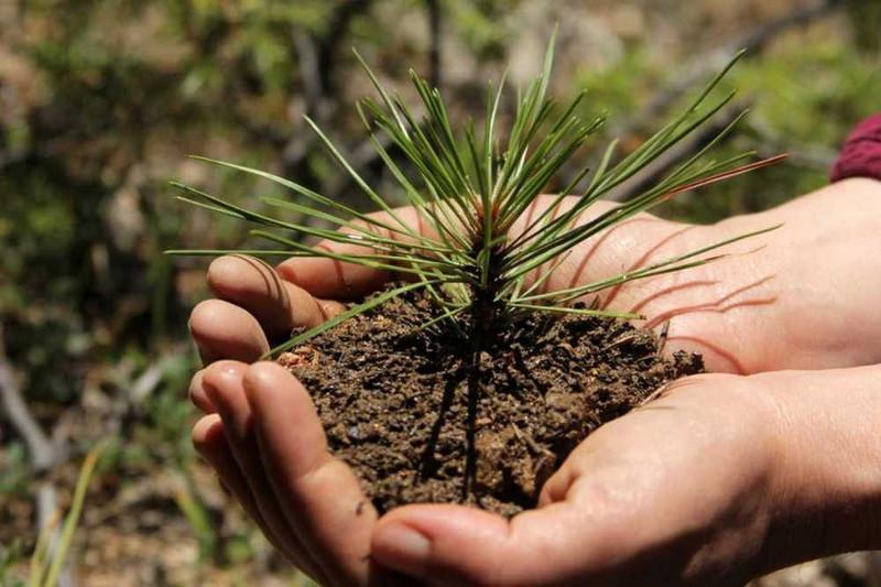 Елордада өтетін сенбілікте 5 мыңға жуық ағаш отырғызылады