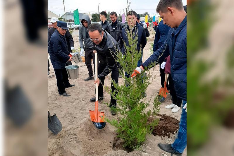 Жамбыл облысында 19 мыңға жуық көшет отырғызылды