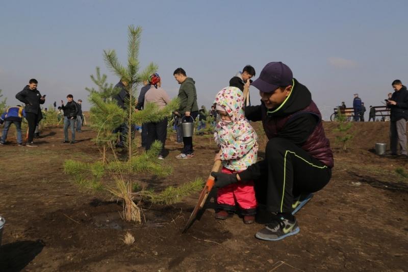 6500 деревьев посадили в Карагандинской области