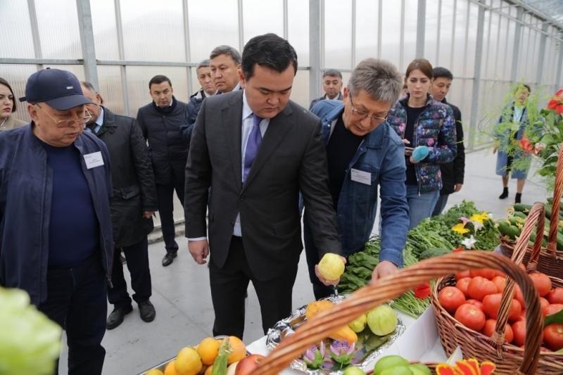 В Карагандинской области собрали 270 тысяч тонн картофеля