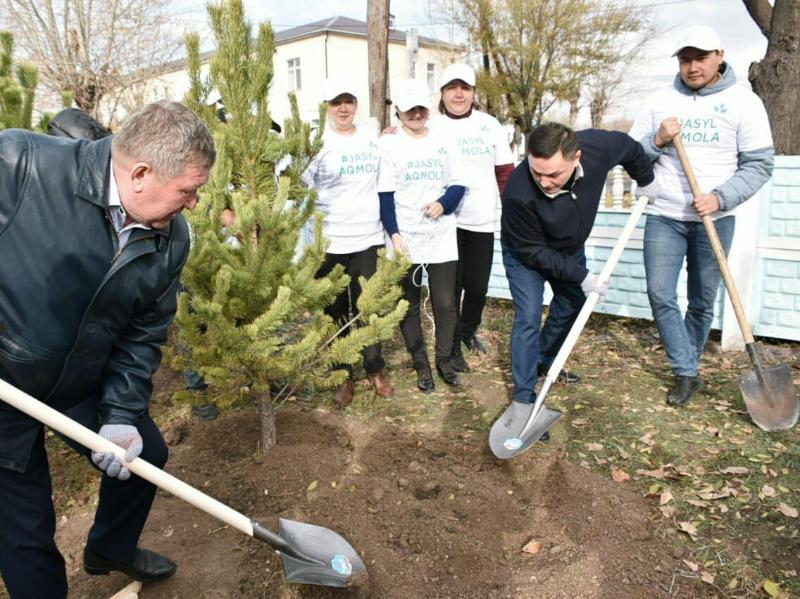 Экологиялық акция: Ақмола облысында 13 мың ағаш отырғызылды