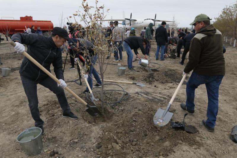Четыре тысячи саженцев деревьев посадили в Атырау