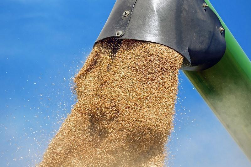 21 тонну зерна пытался вывезти с поля житель СКО