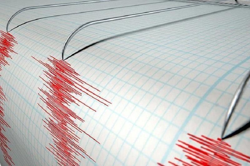 Network of seismic stations records earthquake