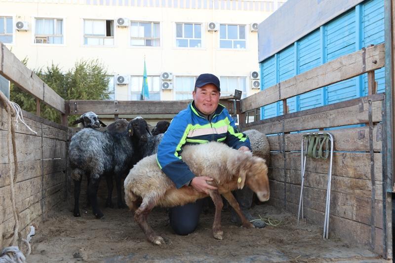 Праздник урожая «Алтын дән» прошел в Кызылординской области