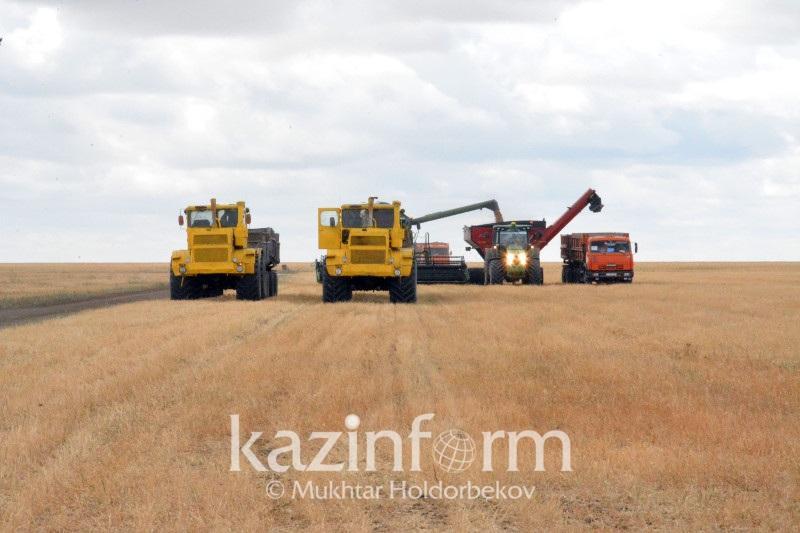 В Казахстане убрано 99,2% площади зерновых культур