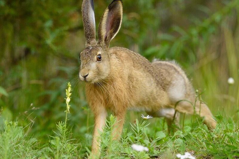 Трое жителей Туркестанской области устроили незаконную охоту на зайцев