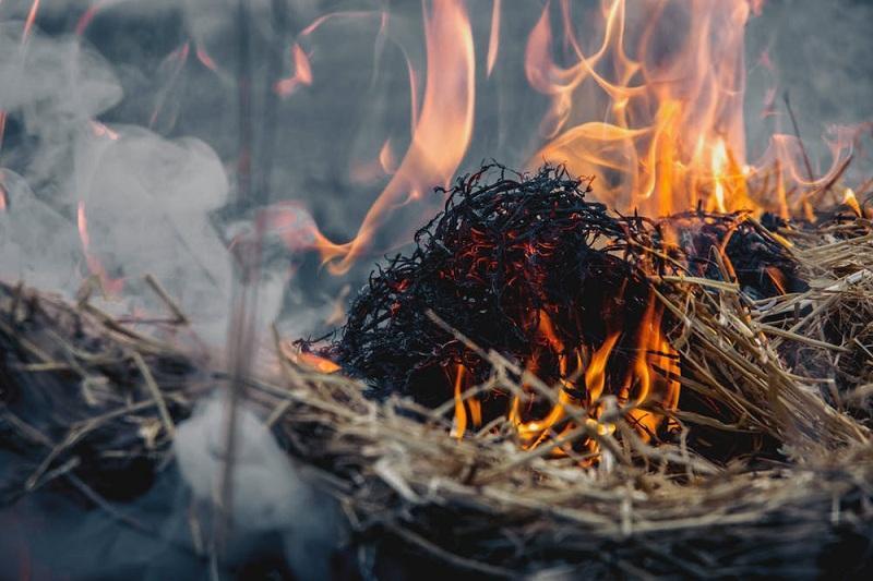 40 тонн сена и 450 гектаров травы сгорело при пожаре в ВКО