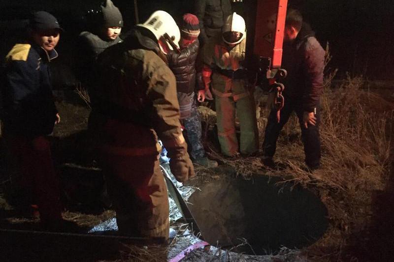 Провалившуюся в выгребную яму лошадь спасли в Актобе