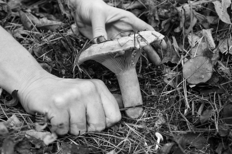 Жительница Рудного ушла по грибы и была убита