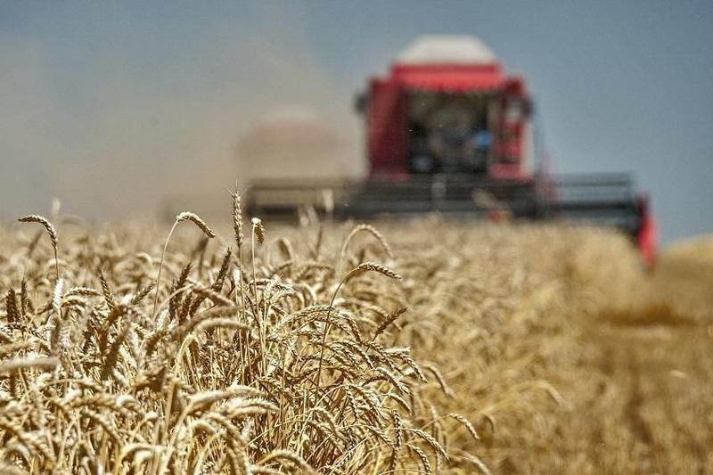 库斯塔奈州完成秋季粮食收割工作