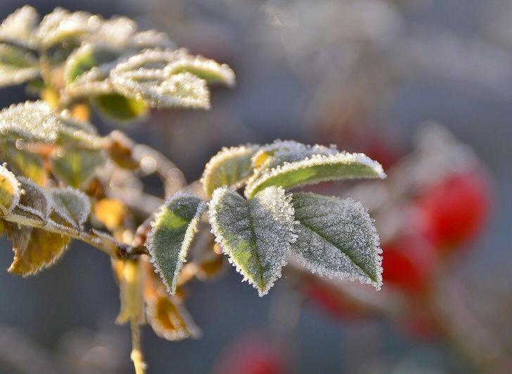 Заморозки ожидаются на юге страны, на севере – осадки, гололед