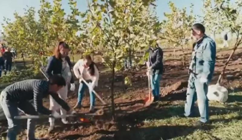 Новые деревья в рамках проекта по озеленению высадили в Алматы