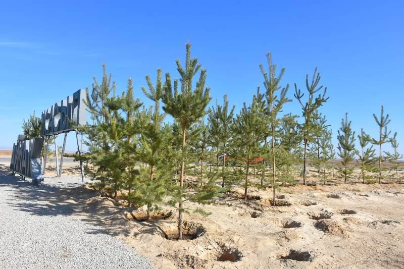 Продолжаются работы по формированию «зелёного пояса» вокруг Туркестана
