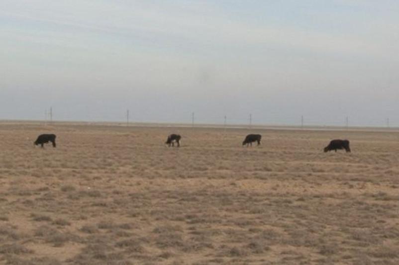 Группу скотокрадов задержали в Туркестанской области