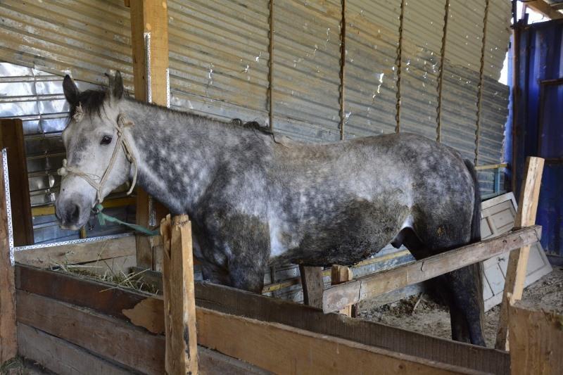 Полицейские вернули украденных лошадей детскому реабилитационному центру в Таразе