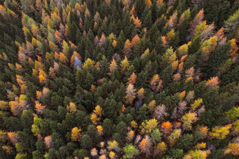 На 12 тысяч га увеличилась за 5 лет площадь леса в Павлодарской области
