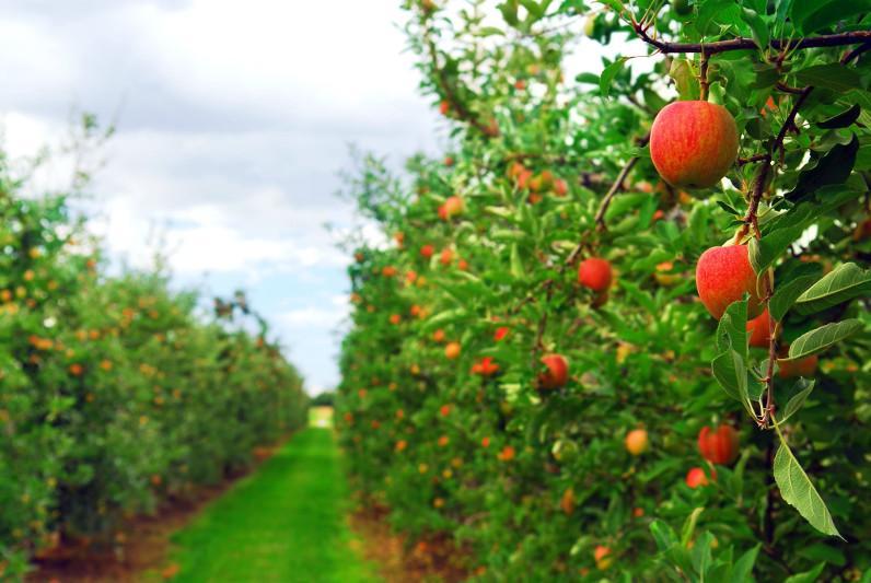 Касым-Жомарт Токаев поручил взять на особый контроль яблоневые сады близ Алматы