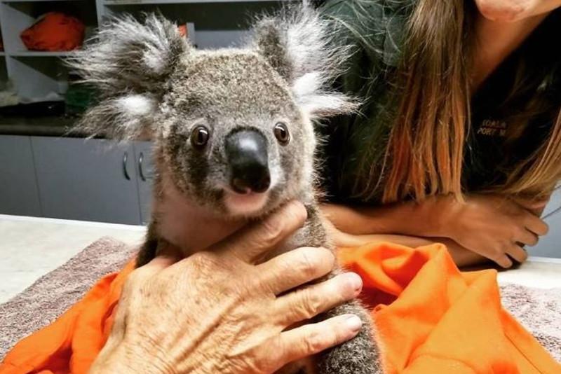 Hundreds of koalas feared dead in severe Australian bushfire
