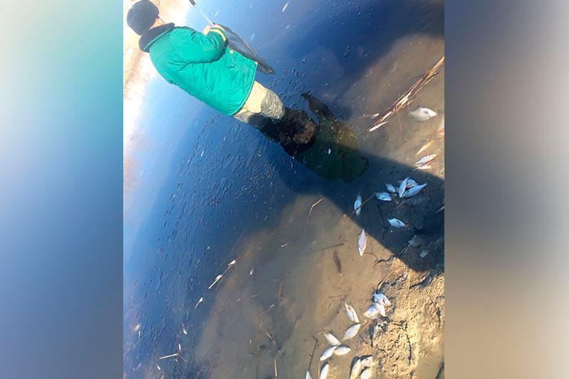 Ақтөбеде Атжақсы өзеніндегі балық қырылып қалды