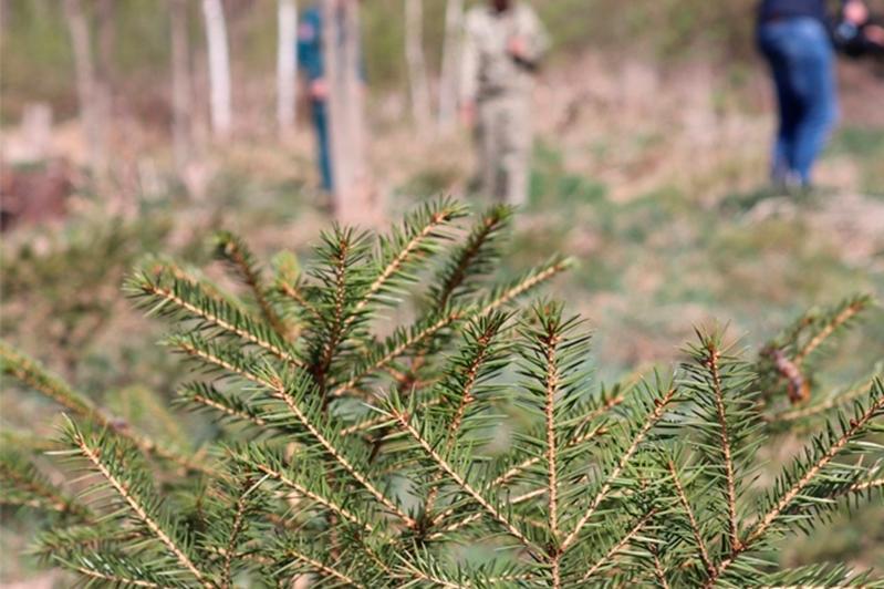 Жер қойнауын пайдаланушылар ағаш отырғызуға міндеттелді