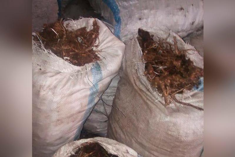 20 мешков золотого корня изъяли у жителей Восточно-Казахстанской области