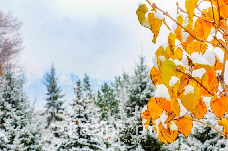 Фоторепортаж: осенний Алматы накрыло снегом