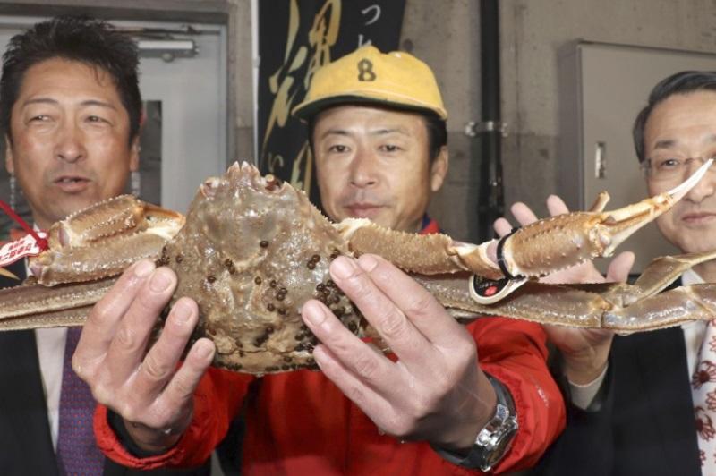 日本雪蟹拍出500万日元世界最高价