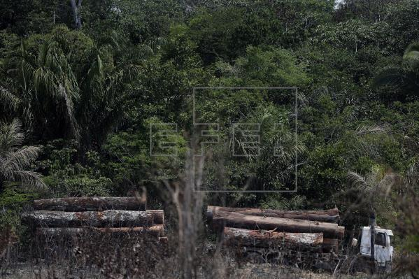 Study: Deforestation in Brazil's Amazon jumped by 80% in September