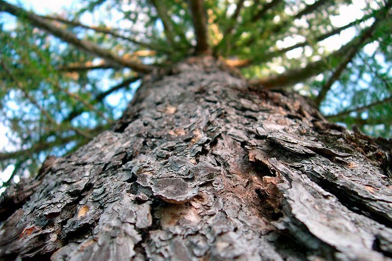 Деревья в Актобе будут оцифрованы и получат паспорта