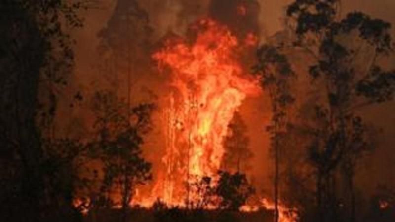Лесные пожары бушуют в Австралии: есть жертвы