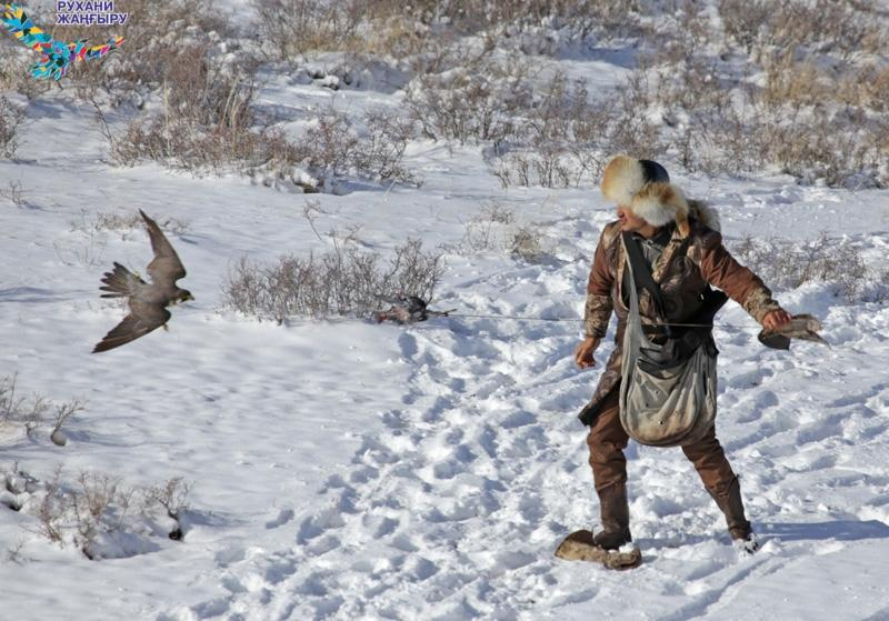 Қарағанды облысында саят құсын салатын үздік бапкерлер анықталды