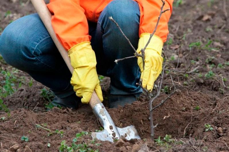 После критики Президента мы не стали рекламировать посадки деревьев в Алматы – Ержан Сейтенов