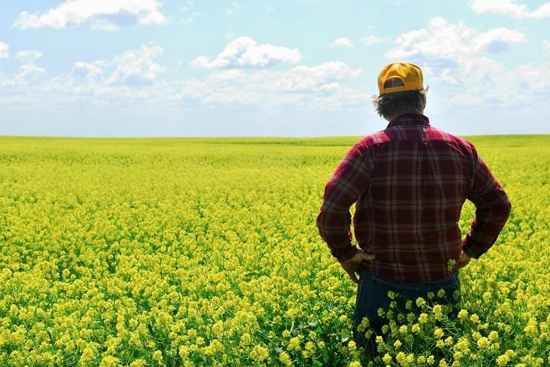 Дожились до того, что добросовестным, трудолюбивым фермерам негде работать - Президент