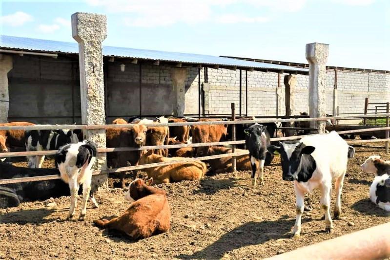 Алматы облысында төрт жігіт ауылдасының 36 ірі қарасын ұрлаған