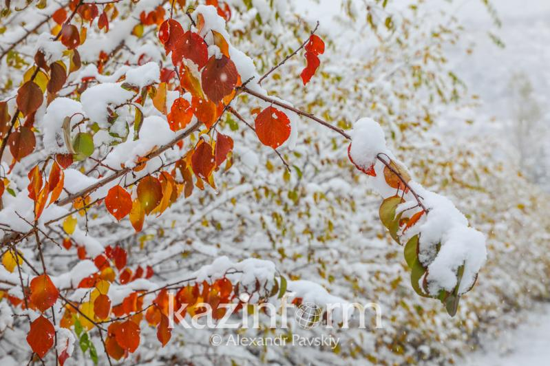 Какая погода ждет казахстанцев 15 ноября