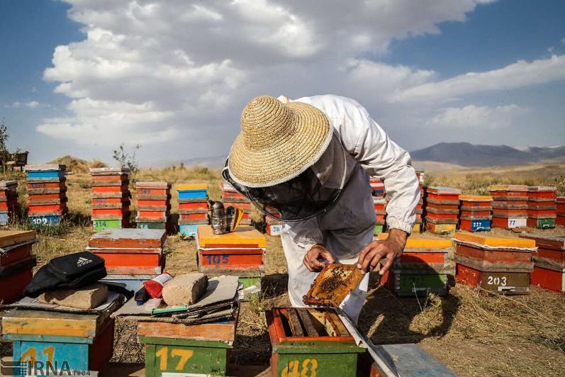 Iran ranks 4thin global honey production