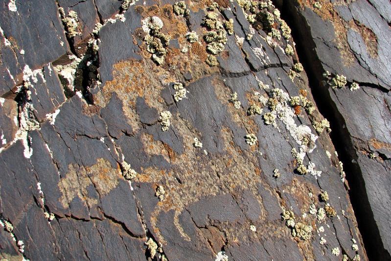 Неизвестные ранее петроглифы помог отыскать жамбылским историкам корреспондент Казинформа