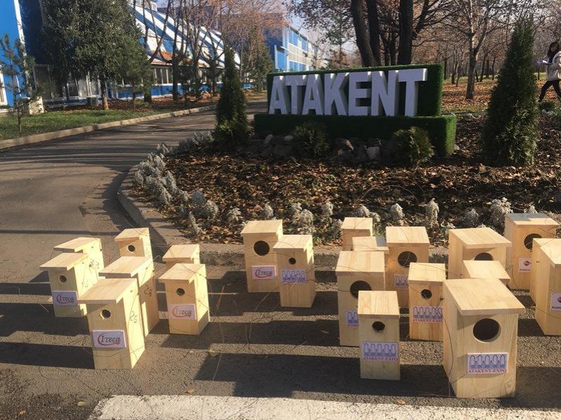 В Алматы решают проблему с нашествием насекомых