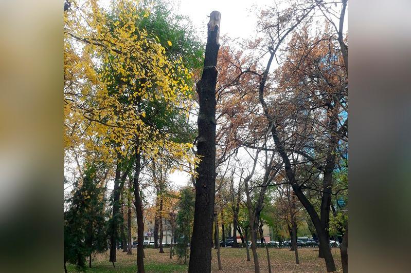 Вырубку деревьев в парке имени 28 гвардейцев-панфиловцев объяснили в акимате Алматы