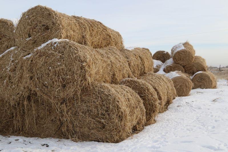 Жамбылдық шаруалар мал қыстатуға 1 млн 700 мың тоннаға жуық шөп жинады