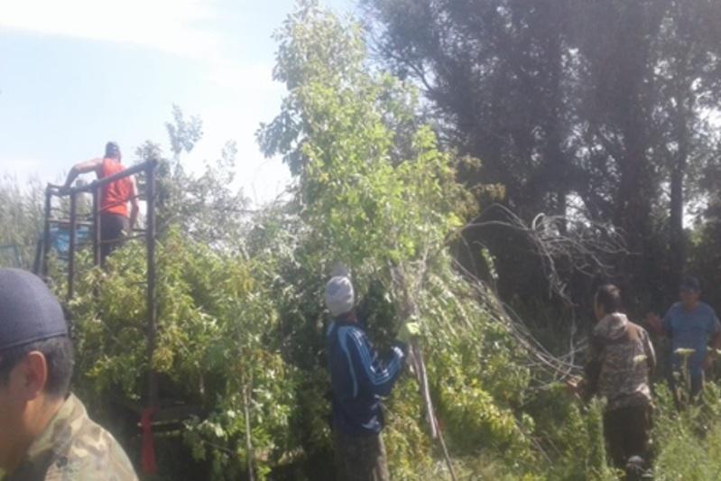 Яблоневый сад возродили в Павлодарской области на средства гранта
