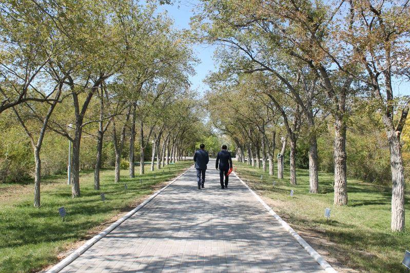 Аллея космонавтов на Байконуре: деревья как люди
