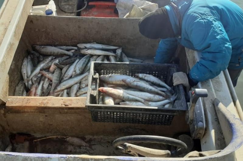 Қапшағайда 300 келі балықты заңсыз аулаған браконьерлер ұсталды