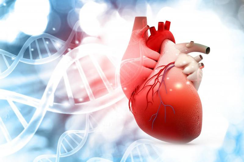 Blue molecule may improve heart function: Israeli researchers