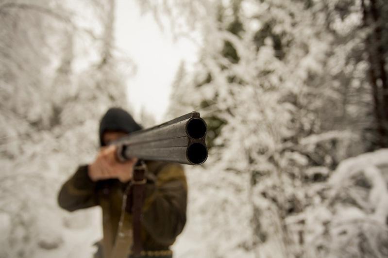 В Торгае браконьер отстрелил 15 кабанов