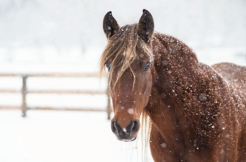 Лошадей на сумму более 14млн тенге похитил карагандинец в Акмолинской области